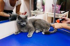 Pflegen einer Katze Stockfoto