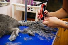 Pflegen einer Katze Stockfotos