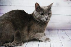 Pflegen einer Katze lizenzfreie stockfotografie