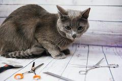 Pflegen einer Katze stockbild