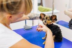 Pflegen eines Hundes lizenzfreie stockfotos