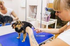 Pflegen eines Hundes stockfotos