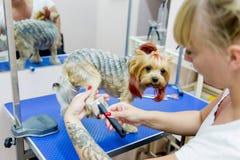 Pflegen eines Hundes Lizenzfreies Stockfoto