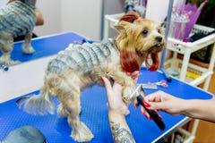 Pflegen eines Hundes Lizenzfreie Stockbilder
