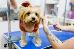 Pflegen eines Hundes Stockbild