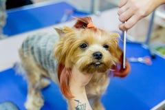 Pflegen eines Hundes Lizenzfreie Stockfotografie