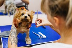 Pflegen eines Hundes stockfoto