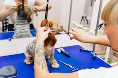 Pflegen eines Hundes stockfotografie
