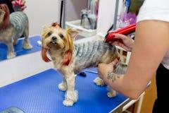 Pflegen eines Hundes lizenzfreies stockbild
