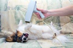 Pflegen für einen Hund lizenzfreie stockfotos