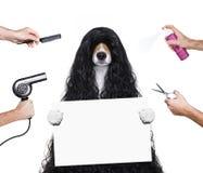 Pflegenhund an den Friseuren Lizenzfreie Stockfotografie