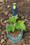 Pflänzchen auf einer pflanzenden Kelle in einem Garten Lizenzfreies Stockfoto