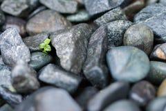 Pflänzchen wächst durch große Felsen Stockfoto