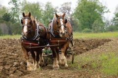 Pflug-Pferde Stockfotografie