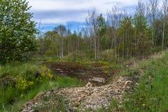 Pflugsohle im Wald lizenzfreie stockbilder