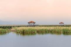 Pfropfen Bua (Lotosteich) Khao Sam Roi Yot National Park Stockfotos