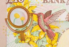 Pfundwährungshintergrund - 10 Pfund Lizenzfreies Stockbild