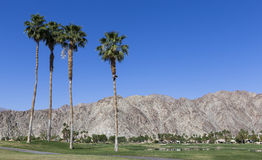 Pga West golf course, Palm Springs, California Royalty Free Stock Images