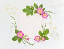 Página del libro de recuerdos con las rosas salvajes y las flores blancas Foto de archivo