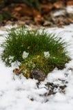 Phénomène de Noël - herbe verte sur la neige blanche, Prague, République Tchèque photo stock