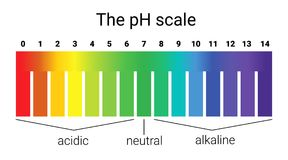 Ph scale. infographic acid-base balance. scale for chemical analysis acid base. Vector illustration. colorful graph for test Stock Photography