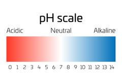 Ph-skala Indikator av pH som uttrycker hastighet av syrlighet eller basicityen i kemi vektor illustrationer