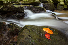 Pha Kluay Mai-vattenfall Royaltyfri Foto