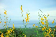 Phacelia und landwirtschaftliche Felder des Rapses, die auf dem Hügel blühen Stockfoto