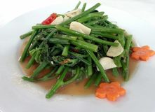 Phad-Pak, Thai vegetables fried innthe oyster sauce and the chilly and the garlic, Thai food, Thailand Royalty Free Stock Photos