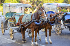 Phaeton (carriage) Royalty Free Stock Images