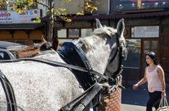Phaeton Horse Passenger waiting area Stock Image