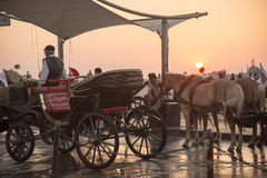 Phaeton. Horses at alsancak, Izmir Turkey August 30 2014, Horses are waiting for customers or tourists Stock Photos
