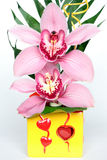 Phalaenopsis Imagenes de archivo