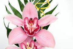Phalaenopsis Stock Photo