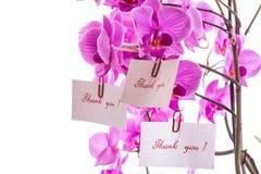 Phalaenopsis Stock Photos