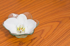The Phalaenopsis in a bowl Stock Images