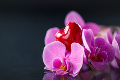 Phalaenopsis branch with a red heart Royalty Free Stock Images