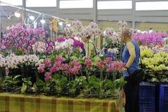 Phalaenopsis da compra do cliente no mercado da flor da cidade de taipei Imagem de Stock Royalty Free