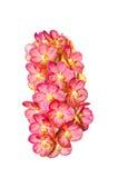 Phalaenopsis dell'orchidea Immagini Stock Libere da Diritti