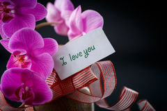 Phalaenopsis line with a declaration of love Stock Photography