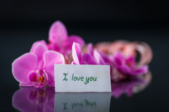 Phalaenopsis line with a declaration of love Stock Images