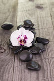 Phalaenopsis orchid and black stones Stock Image