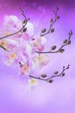 Phalaenopsis. Stock Images
