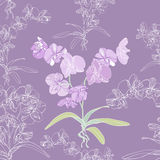 Phalaenopsis orchid seamless background Royalty Free Stock Photography