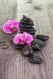 Phalaenopsis orchids and black stones Royalty Free Stock Image
