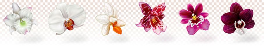 Phalaenopsis and other orchids hybrids Stock Photography