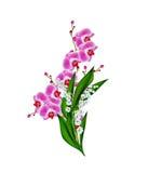 Phalaenopsis van de orchidee Stock Fotografie