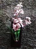 Phalaenopsis van de orchidee Stock Foto