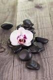 Phalaenopsisorkidé- och svartstenar Fotografering för Bildbyråer