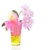 Phalenopsis orchid arrangement Royalty Free Stock Photo